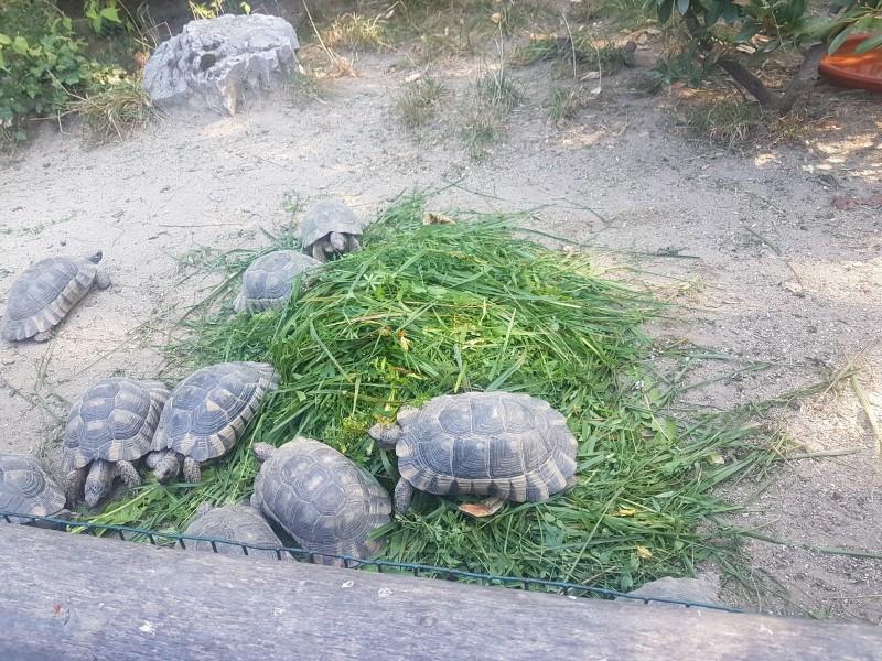 Posjet zoo vrtu (3)