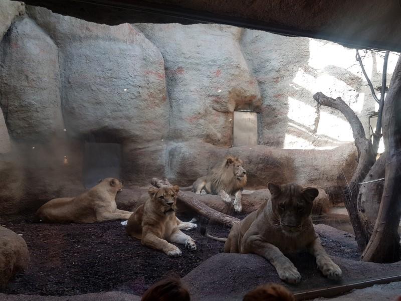 Posjet zoo vrtu (4)