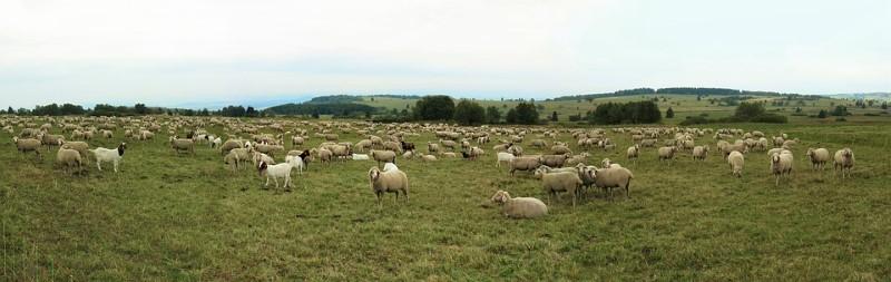 Ovca? Da, Isusova ovca!