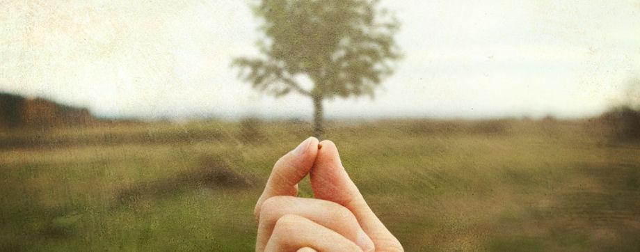 Od sjemena do Kraljevstva – čovjekova najveća zadaća